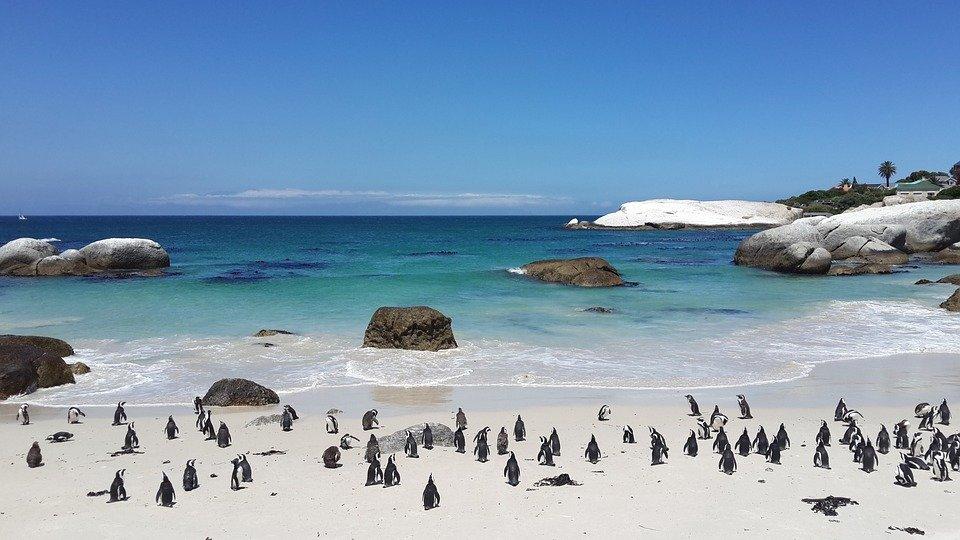 Boulders Beach (Südafrika)