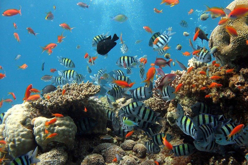 Korallenriff - Australien