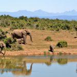 Einmalige Erlebnisse in Südafrika – Tanja verrät ihre Geheimtipps