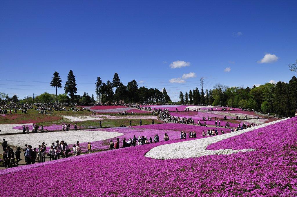 Hitsujiyama Park - Japan