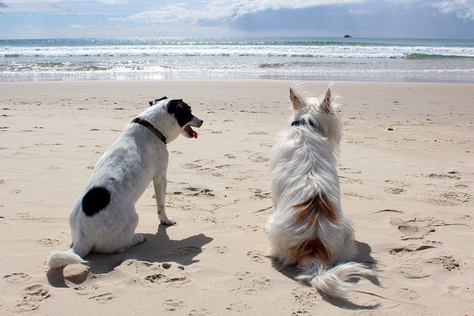 Hund, Strand, Pixabay