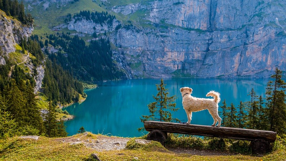 Hund, Wandern, Berg, See