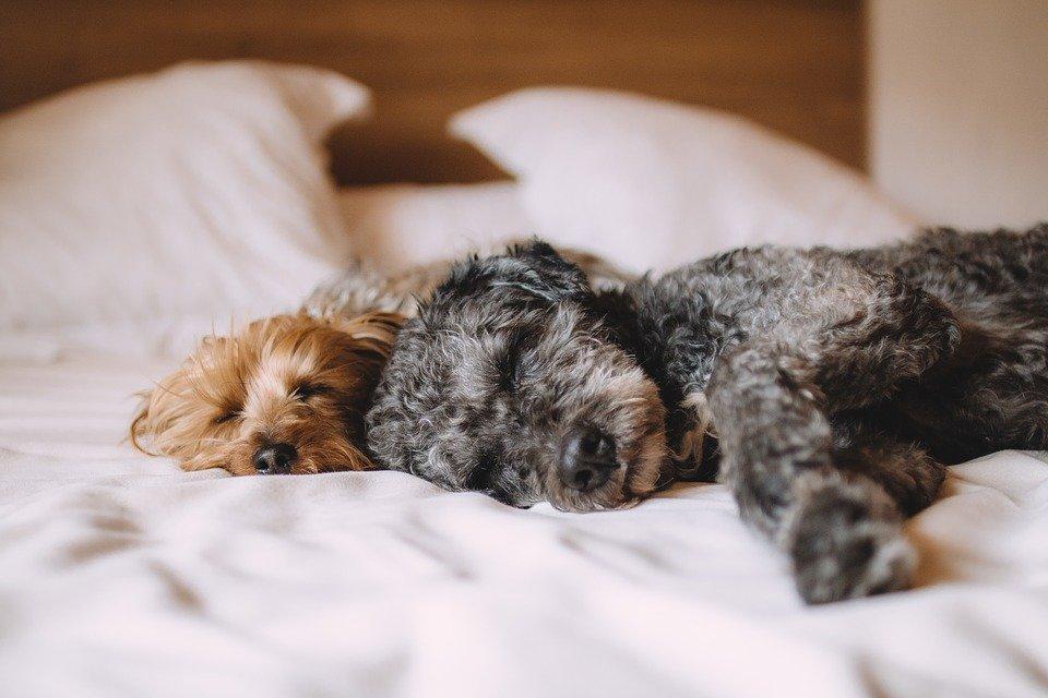 hund bett, hotel, schlafen