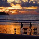 Urlaub mit Hund: Reisetipps für den perfekten Hundeurlaub