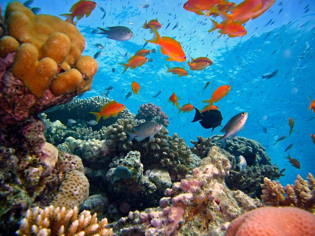 Tauchen, Ägypten, Fische, Riff, Korallen