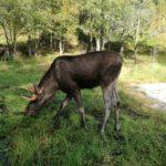 Trolle, Fjorde, Wasserfälle – ein Land das bewegt: Lenas Tour durch Norwegen