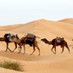 Einreisebestimmungen Tunesien – Brauche ich für die Einreise einen Reisepass?