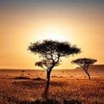 Einreisebestimmungen für Südafrika- Brauche ich einen Reisepass?
