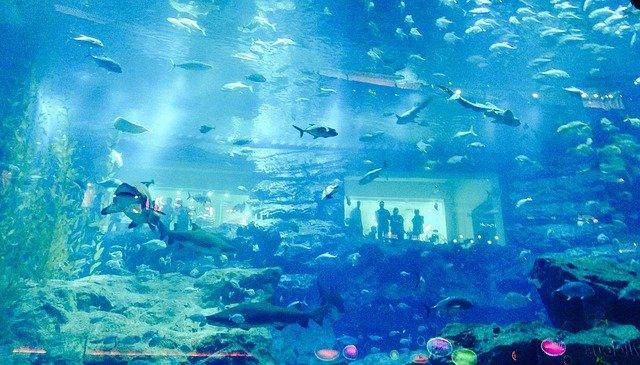 Mall of the Emirates -Unterwasserzoo