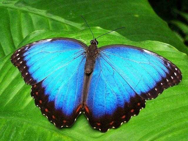 Schmetterlinge im Miracle Garden